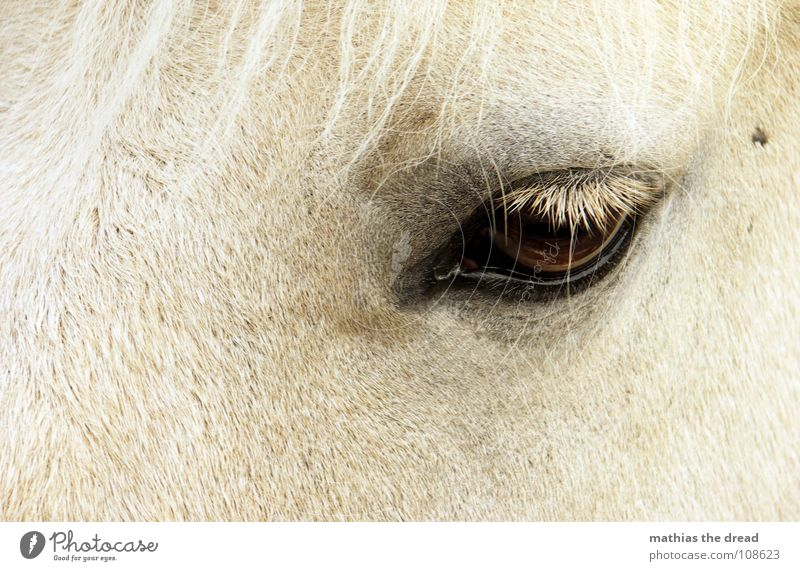 Dark Hair and hairstyles Sadness Bright Large Horse Grief Pelt Near Trust Mammal Eyelash Loyalty