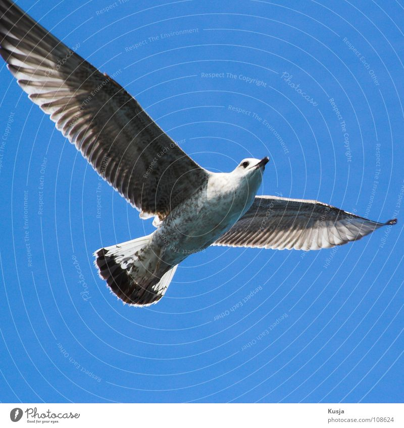 Blue White Black Bird Flying Walking Wing Driving Hunting Sailing Seagull Hover Curve Blow Pull Turkey
