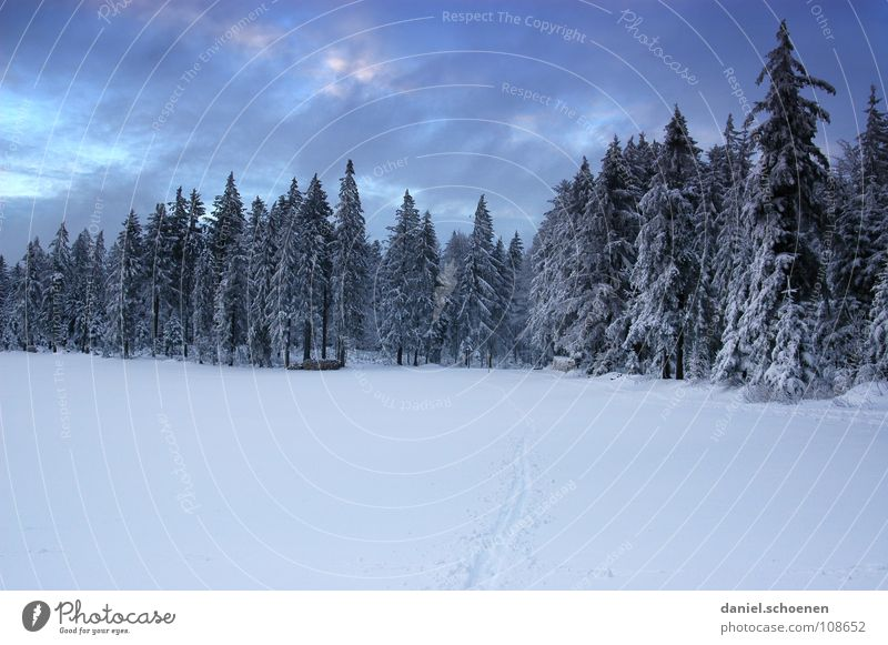 Christmas card 7 Black Forest White Deep snow Winter sports Hiking Leisure and hobbies Vacation & Travel Jinxed Mystic Abstract Background picture Fir tree