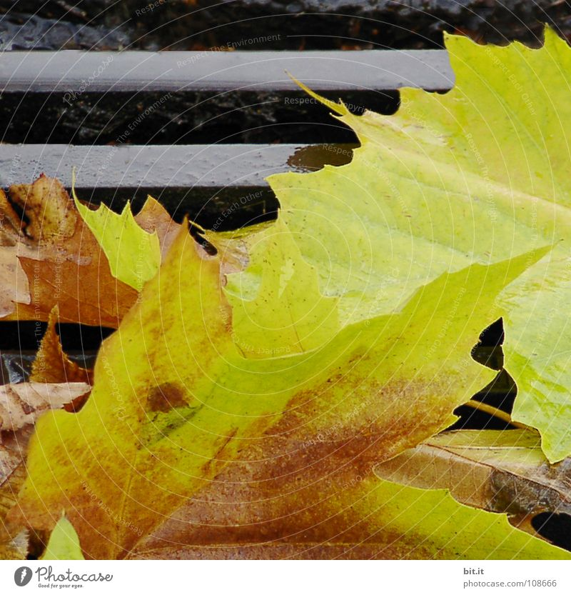 Leaf Yellow Far-off places Cold Autumn Lanes & trails Brown Lie To fall Stalk Sidewalk Doomed Repeating Beige Gully Erudite
