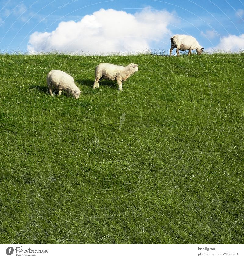 Sky Nature Blue Vacation & Travel Green Summer Animal Clouds Calm Relaxation Meadow Coast Field Idyll Clothing Soft