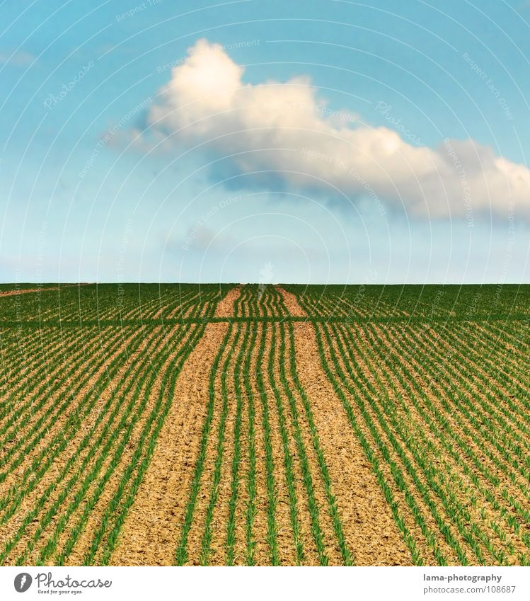 Sky Nature Blue Summer Clouds Far-off places Autumn Grass Spring Lanes & trails Line Brown Field Weather Wind Perspective