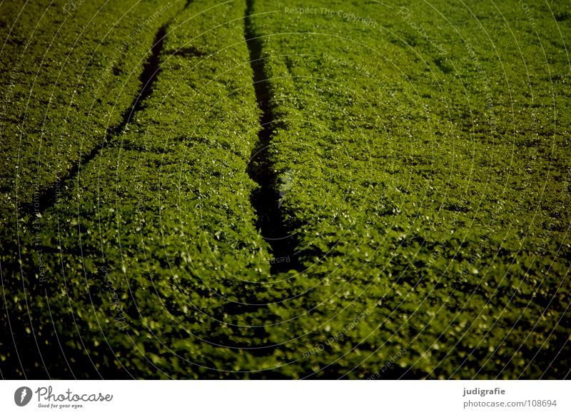 acre Field Green Sowing Hill Waves Agriculture Brown Tracks Traffic lane Colour Harvest Line Earth Floor covering trekker Tractor track