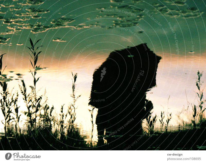 Woman Human being Man Blue Water White Sun Joy Clouds Black Autumn Dark Graffiti Grass Lamp Park