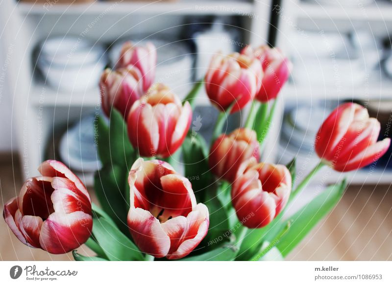 tulip bouquet Style Happy Living or residing Flat (apartment) Garden Decoration Plant Flower Tulip Leaf Blossom House (Residential Structure) Select Blossoming