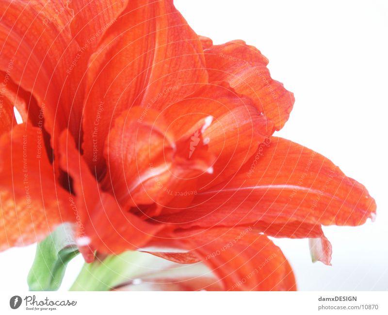 flower snort Flower Red Nature Colour