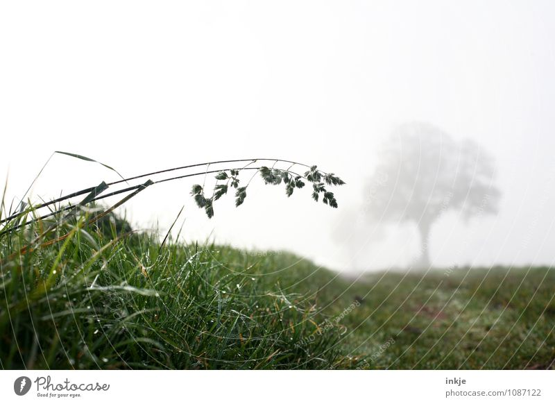 early in the morning in the fields Environment Nature Landscape Plant Air Autumn Winter Climate Weather Bad weather Fog Ice Frost Tree Grass Meadow Field