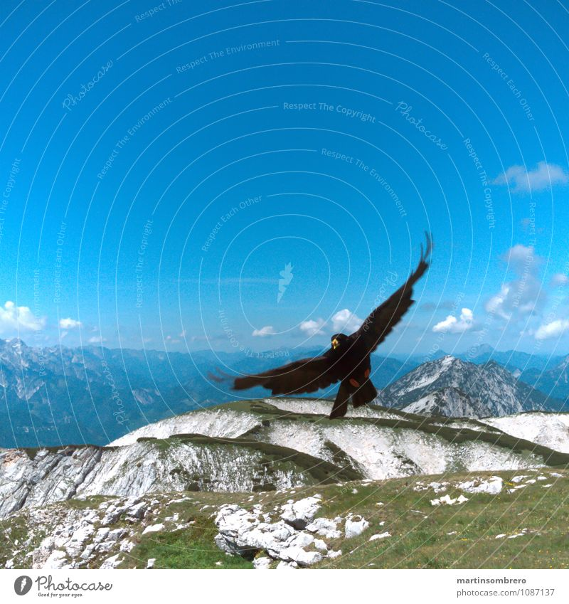 Nature Blue Summer Landscape Calm Animal Mountain Environment Grass Freedom Bird Authentic Tall Infinity