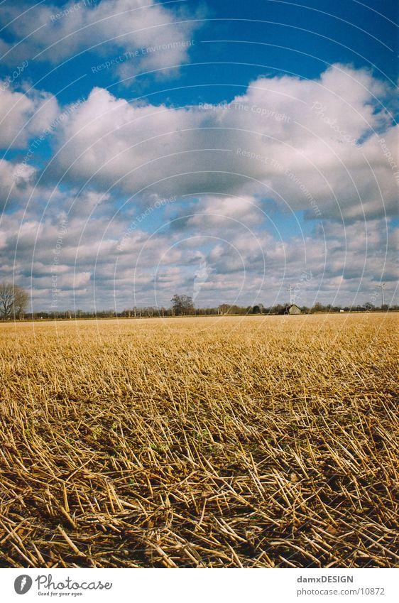 stubble field Clouds Yellow Sky Blue Stopper Grain