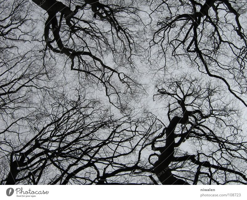 tangle of trees Tree Branched Gloomy Loneliness Gray Rügen Exterior shot grey and black Search just one way? no life the sky Irritation