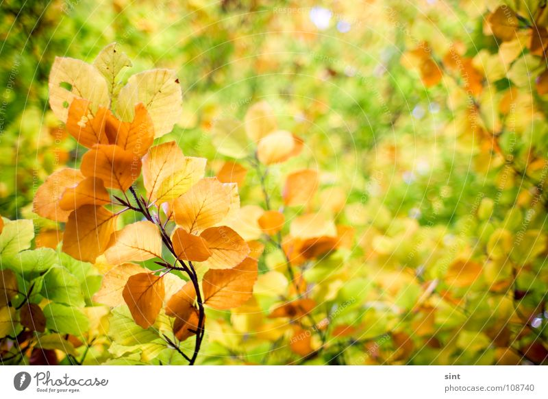 Nature Beautiful Tree Green Plant Leaf Yellow Forest Autumn Garden Park Orange Background picture November October