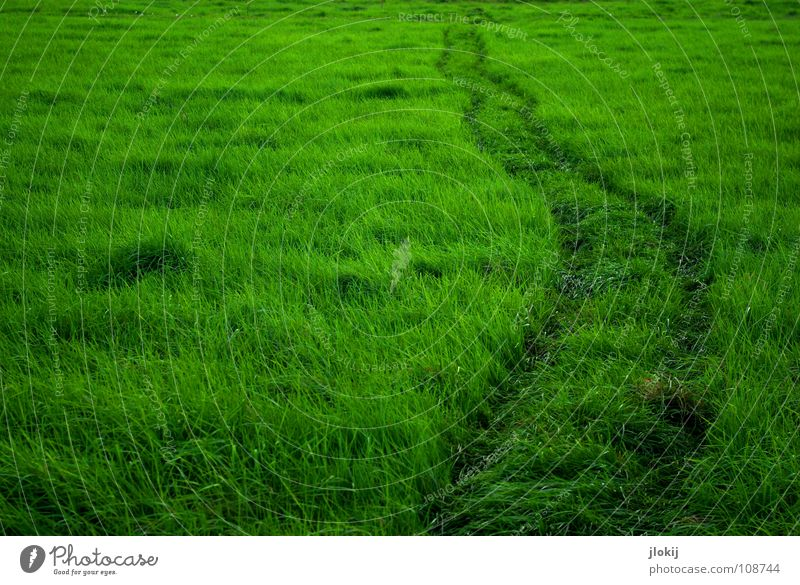 Nature Green Plant Summer Life Relaxation Meadow Grass Lanes & trails Wind Lawn To go for a walk Soft Tracks Idyll