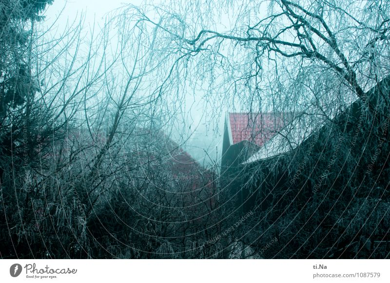 Blue White Tree House (Residential Structure) Winter Black Cold Architecture Snow Building Gray Garden Ice Growth Fog Bushes