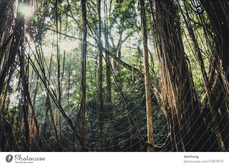lost in the clockforest. Environment Nature Plant Summer Beautiful weather Tree Liana Virgin forest Vacation & Travel Fragrance Dark Exotic Fantastic Fresh