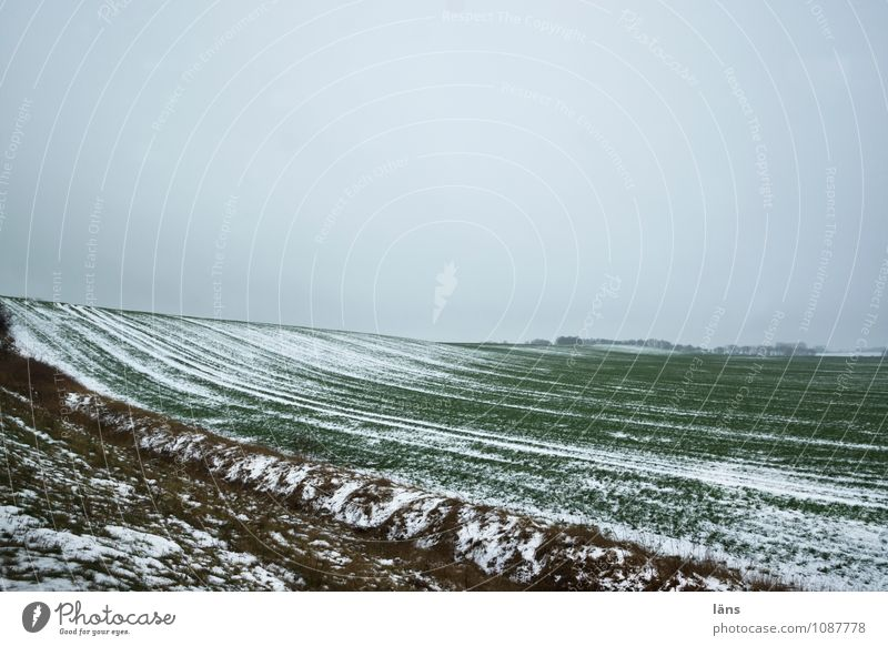 winter landscape Agriculture Forestry Environment Nature Landscape Earth Winter Ice Frost Field Cold Beginning Snowfall Snowscape Exterior shot Pattern