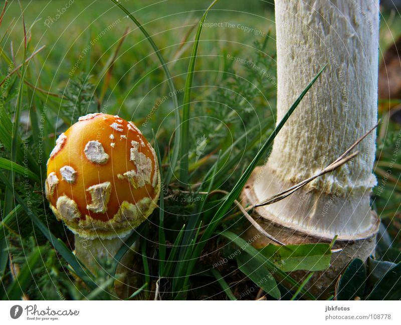 Nature Plant Green White Environment Yellow Autumn Meadow Grass Small Food Orange Large Nutrition Round Tree trunk