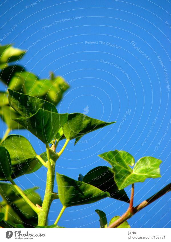 Sky Green Blue Summer Leaf Garden Park Ivy