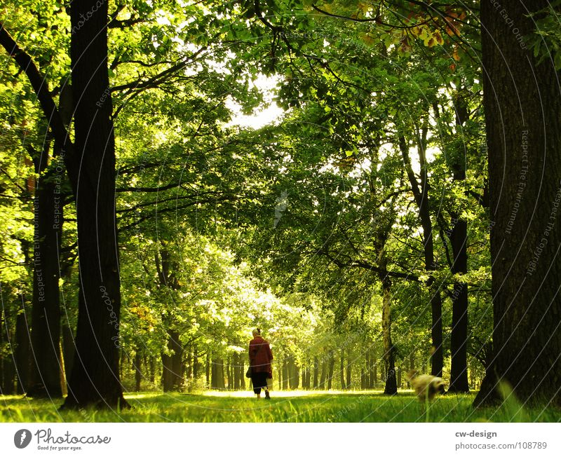 Human being Tree Summer Joy Calm House (Residential Structure) Clouds Loneliness Forest Dark Relaxation Grass Sadness Park Think Fog