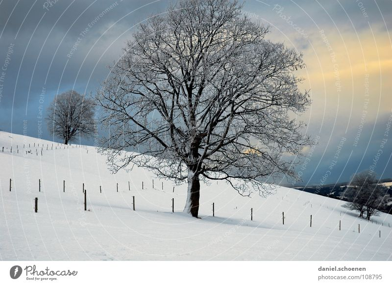 Christmas card 8 Tree Winter Black Forest White Deep snow Hiking Leisure and hobbies Vacation & Travel Background picture Snowscape Horizon Loneliness Cold
