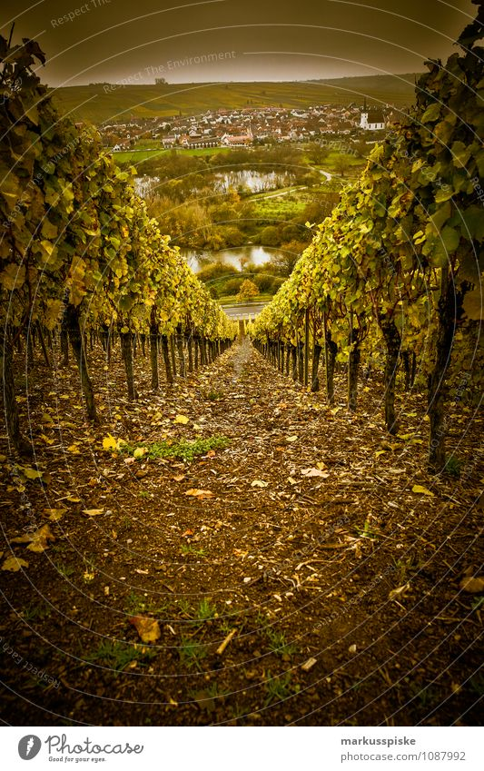 Nature Mountain Environment Tourism Growth Perspective To enjoy Vine Bottle Valley Main Gourmet Franconia Winegrower Riverbed Vintage Festival