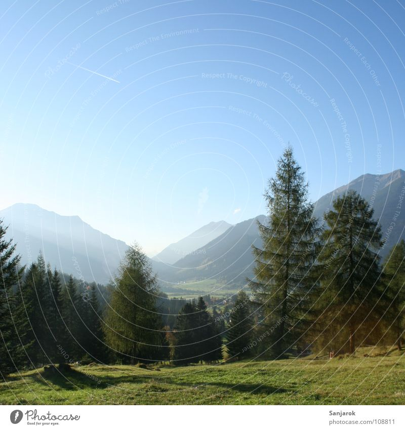 Sky Tree Sun Green Blue Summer Forest Meadow Mountain Hiking Horizon Tall Bushes Alps Pine Peak