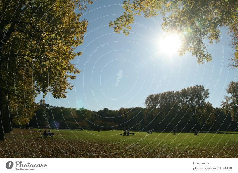 Sky Nature Blue Green Sun Leaf Colour Calm Relaxation Landscape Meadow Autumn Warmth Freedom Garden Group