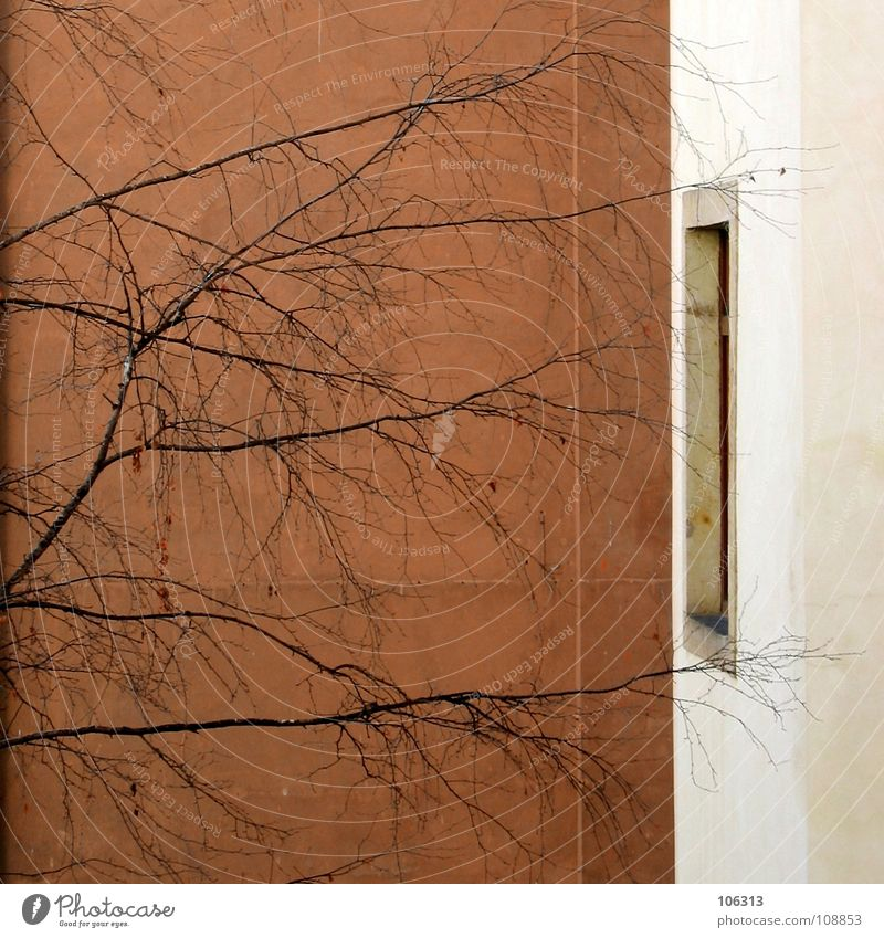 House (Residential Structure) Wall (building) Window Dream Wall (barrier) Arm Dangerous Threat Branch Touch Living thing Entrance Thought False Twig Anonymous