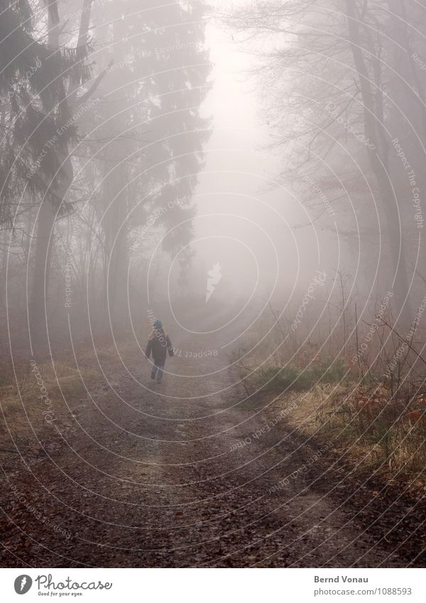 homerun Beautiful Child Back Nature Weather Fog Rain Tree Forest Transport Wood Running Walking Perspective Footpath Dreary Haze To go for a walk Dreamily