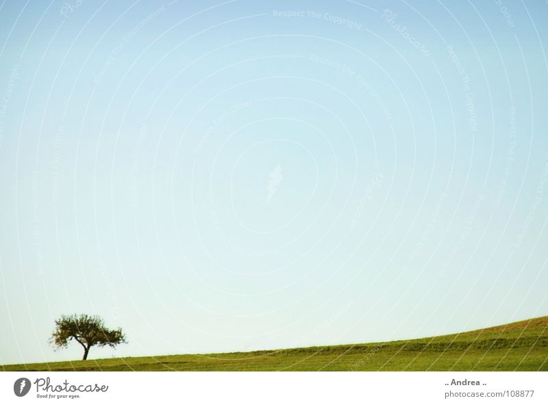lone fighters Landscape Sky Tree Meadow Blue Green Loneliness Idyll Sky blue Windows XP Austria Azure blue windows wallpapers vista windows vista Colour photo