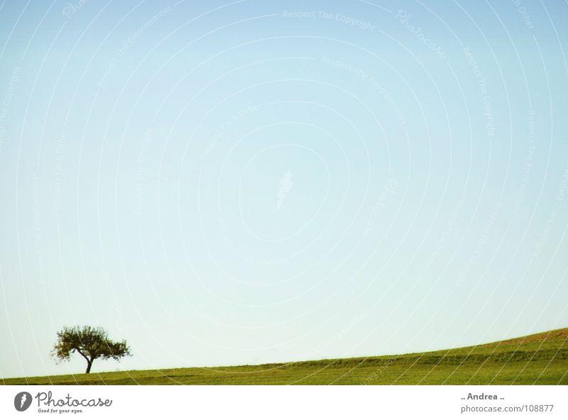 Sky Blue Green Tree Loneliness Landscape Meadow Idyll Austria Sky blue Information Technology Azure blue Operating system Windows XP