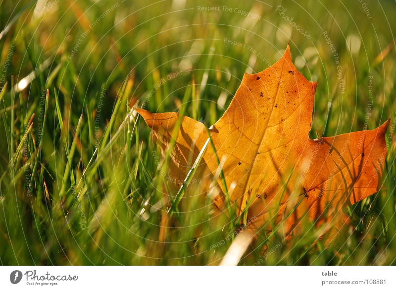 Sun Blue Leaf Autumn Meadow Orange Rope Lawn
