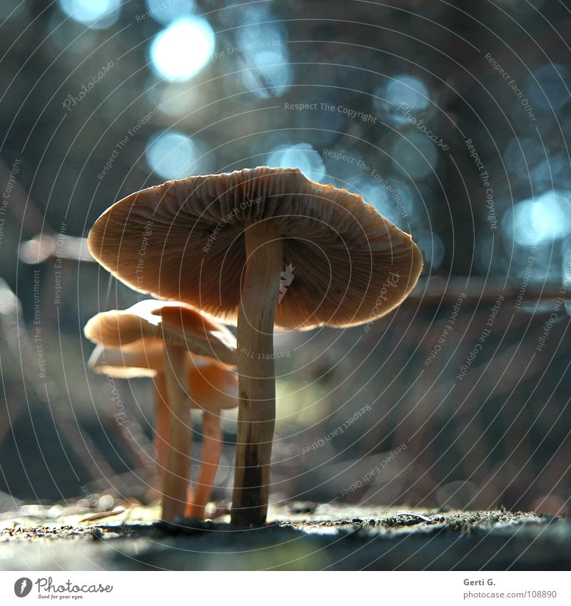 Blue Colour Black Forest Dark Bright Glittering Illuminate Protection Point Umbrella Mushroom Obscure Muddled Patch Glow