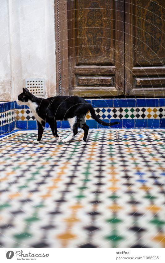 Tierisch gut: Cat Door Animal Pet 1 Exotic Near and Middle East Morocco Tile black hangover Domestic cat Colour photo Multicoloured Exterior shot