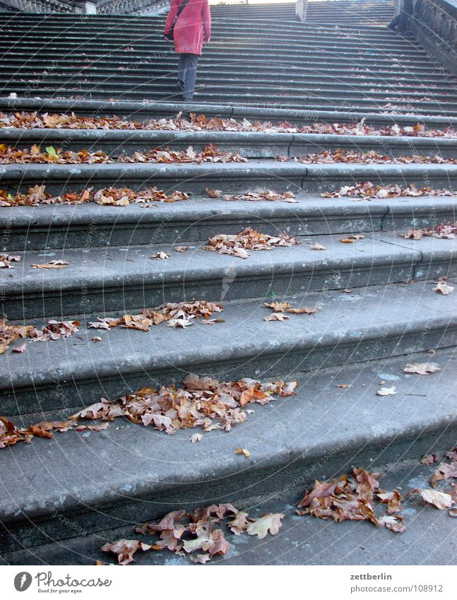 Woman Human being Leaf Autumn Architecture Stairs Upward Ascending Career Downward Go up Resume Descent Potsdam Steps