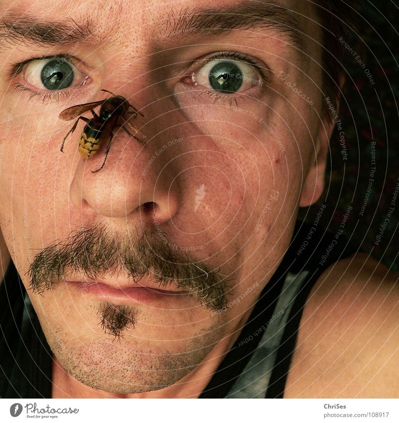 Man Face Black Eyes Yellow Fear Nose Stress Panic Self portrait Spine 100 Northern Forest Portrait photograph Irony Hornet