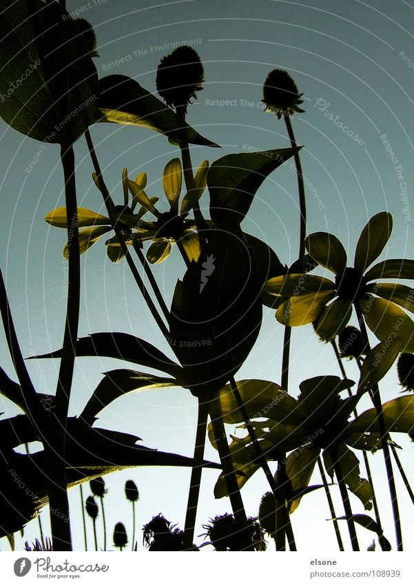 Nature Sky Flower Plant Leaf Yellow Autumn Blossom Stalk