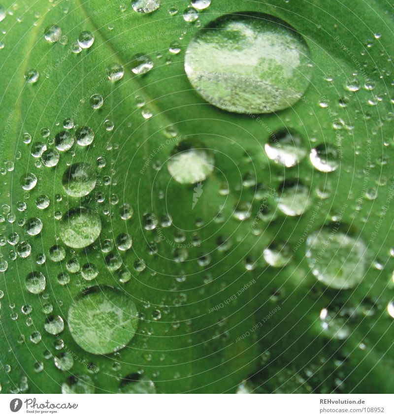 Dropsche on leaflet // 2 Green Leaf Wet Damp Vessel Hydrophobic Drops of water Soft Plant Macro (Extreme close-up) Close-up Summer Glittering Rain Smoothness