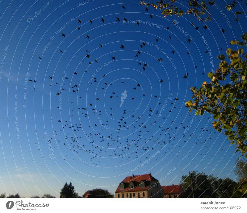 Beautiful Leaf Autumn Warmth Bird Physics Longing Sky blue Flock of birds