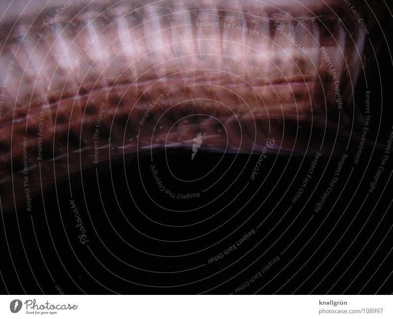 waveman Man Facial hair Waves Pink Facial colour Black Colour Face Movement Looking