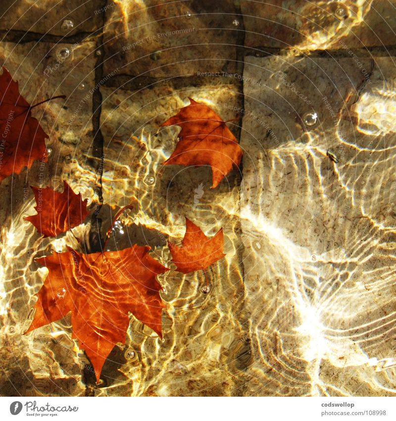 Nature Water Beautiful Red Leaf Autumn Orange Glittering Swimming pool Well Visual spectacle Water fountain Bronze Sandstone American Sycamore