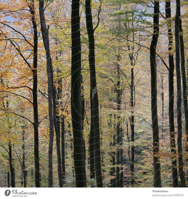 Tree Green Red Leaf Yellow Forest Cold Autumn Mountain Wood Air Brown Orange Germany Hiking Fresh