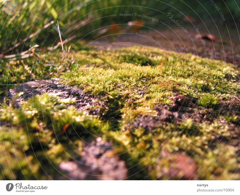 Nature Green Meadow Grass Moss