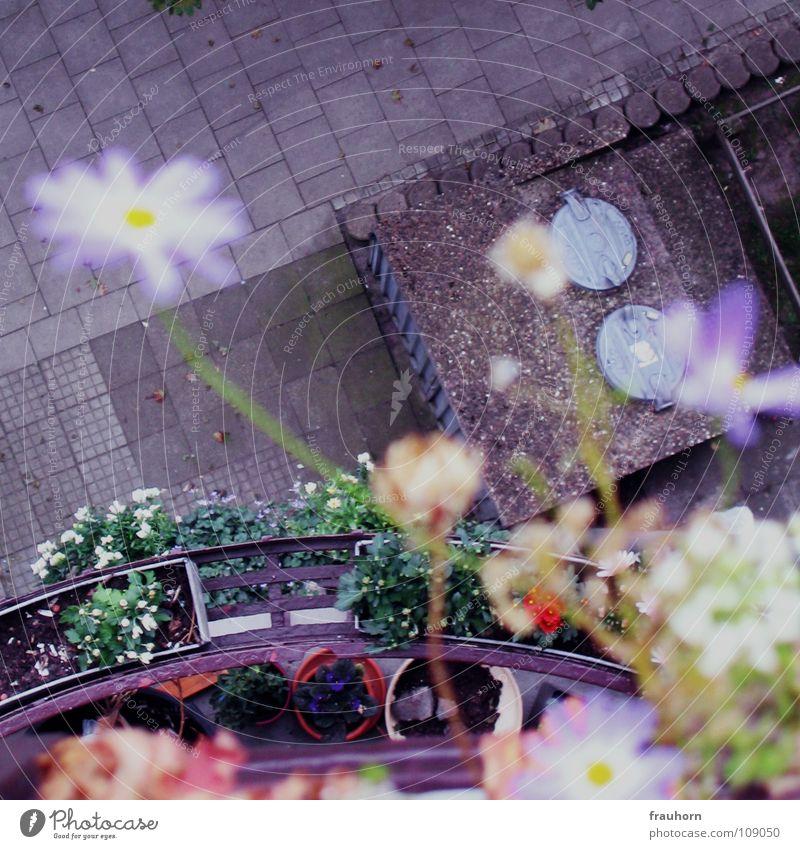 flower wall Flower Balcony Asphalt Gray Summer Above Deep Blue Cobblestones waste bin lid autumn and winter Blur Faded