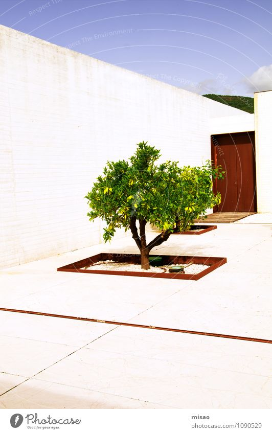 Nature Vacation & Travel Old Blue Green White Sun Tree Calm House (Residential Structure) Wall (building) Wall (barrier) Garden Brown Growth Elegant