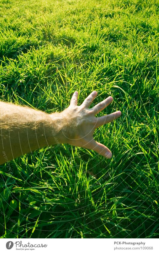Hand Green Plant Emotions Grass Hair and hairstyles Skin Arm Fingers Touch Traffic infrastructure Blade of grass Botany Reach Parts of body Green space
