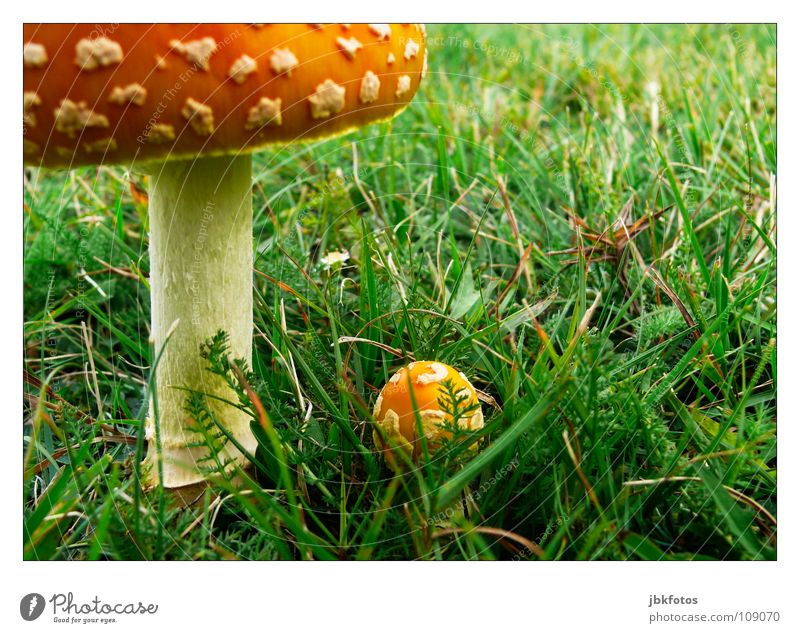 ..T..o.. Canada Nova Scotia Mushroom Large Grass Gray Green Orange White Yellow Small Converse Contrast Meadow Field Garden Horticulture Tree trunk Patch Point