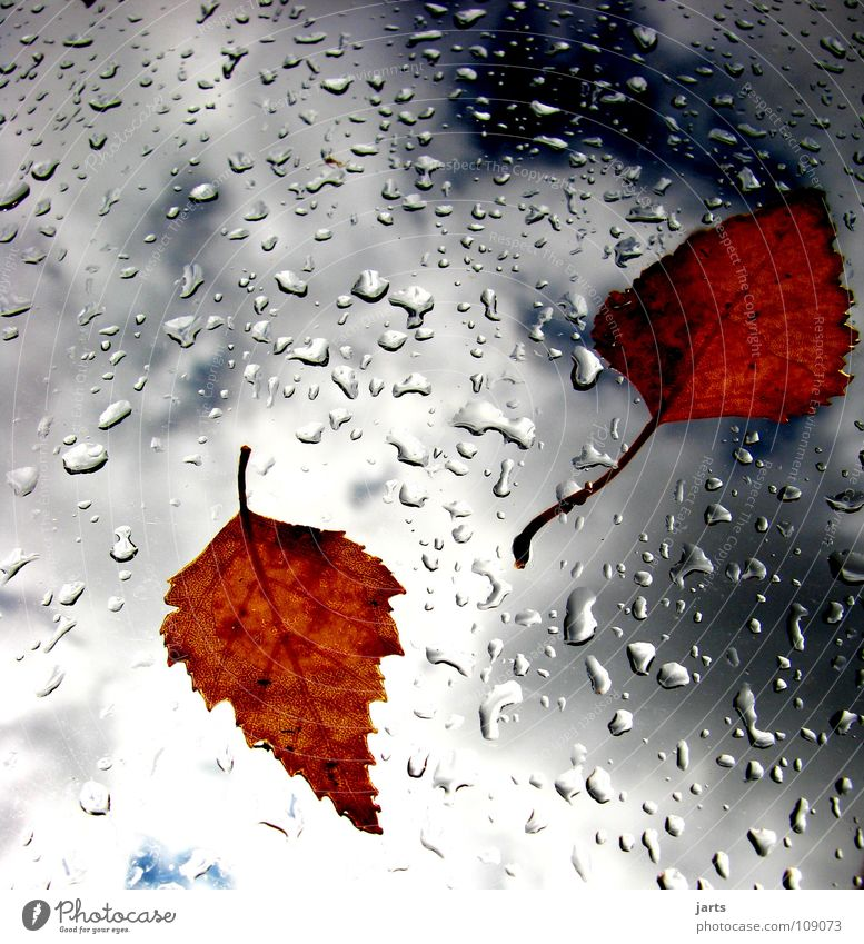 Sky Leaf Clouds Autumn Rain Weather Drops of water Wet Transience Thunder and lightning Autumn leaves Bad weather Autumnal weather