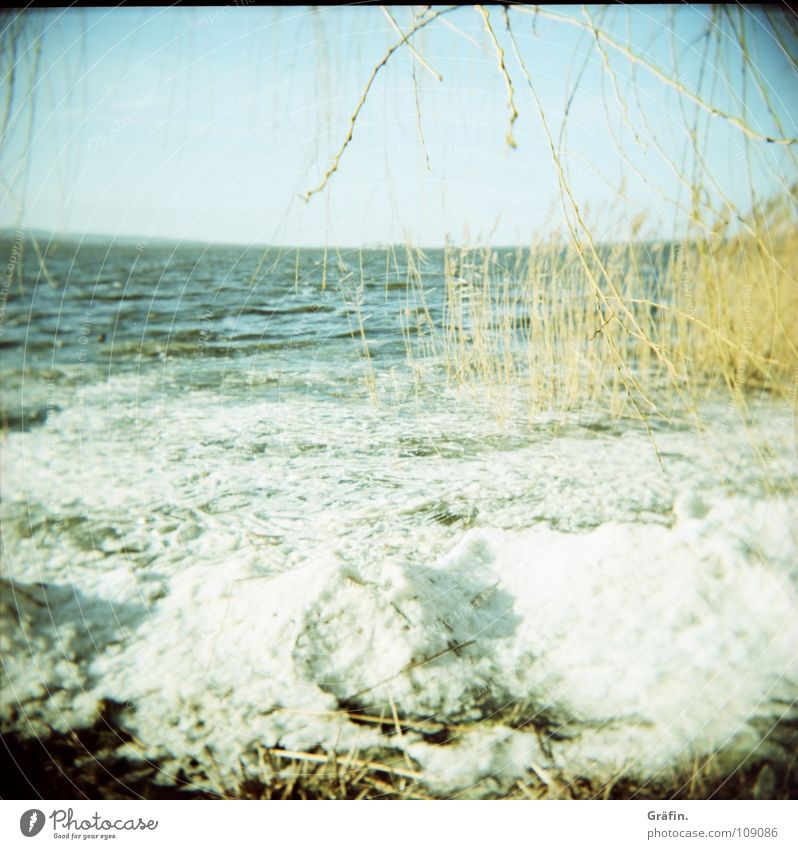 ice drift Cold Winter Tree Common Reed Ocean Horizon Waves Ice crystal Freeze to death Frozen Interior lake Holga Loneliness Calm Splashing Ice cube Ice floe