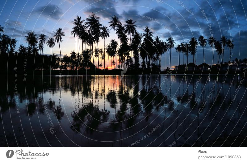 beautiful sunset palm trees reflecting in a pool at beach Sky Nature Vacation & Travel Blue Green Colour White Summer Sun Tree Relaxation Ocean Landscape Joy House (Residential Structure) Beach