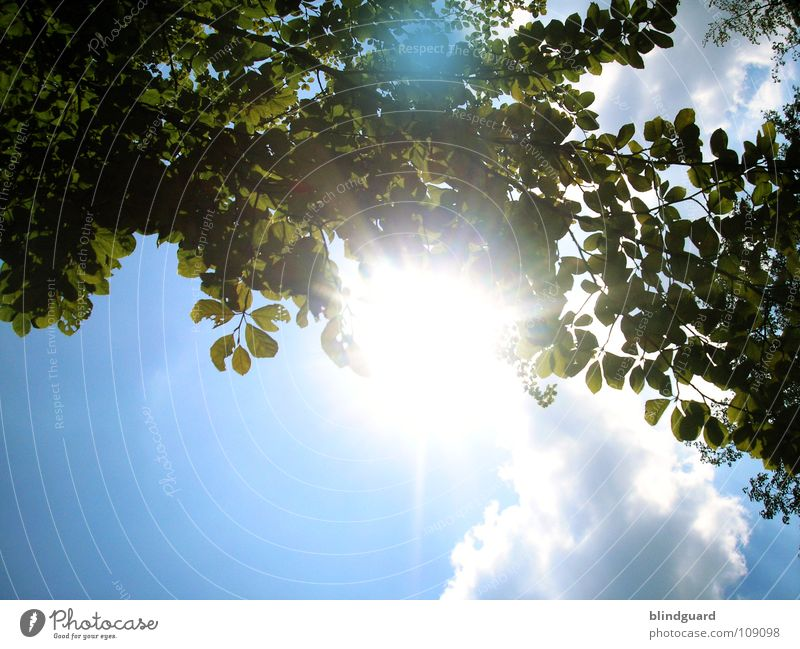 Sky Nature Blue Green Summer Tree Plant Sun Leaf Clouds Life Above Bright Roof Branch Dazzle